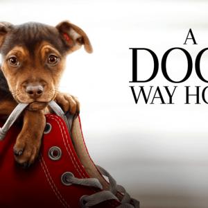 dog's way home