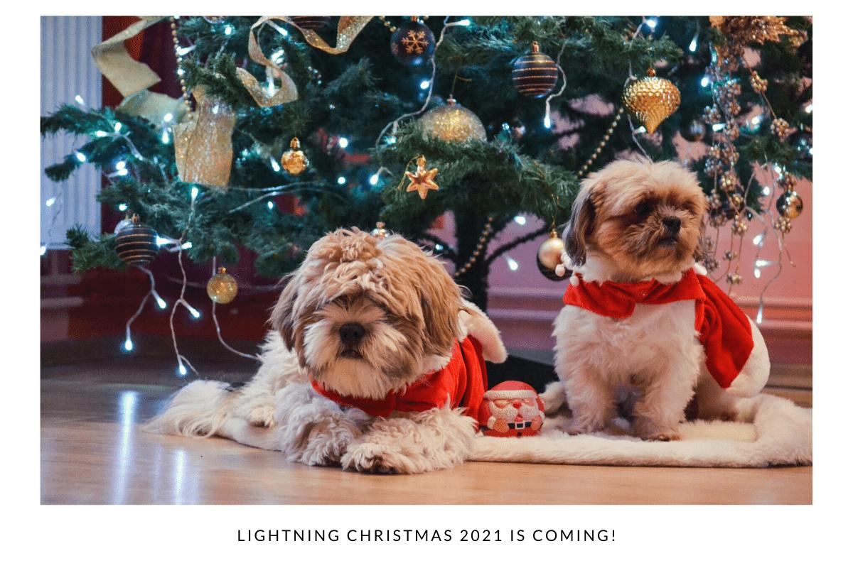 căței și Crăciun, cuteness overload