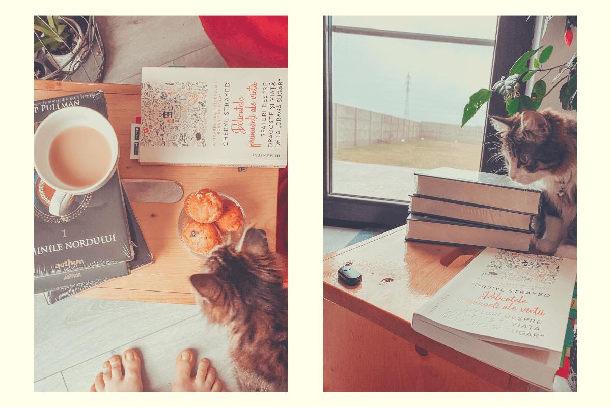 pisici și cărți